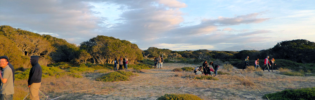 Students from Hartnell College botany class measure species richness in the chaparral at UCSC Fort Ord Natural Reserve
